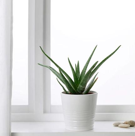 interior design services kerala
